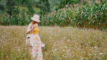 Sủng Là được xem là địa điểm ngắm hoa lý tưởng nhất tại Hà Giang