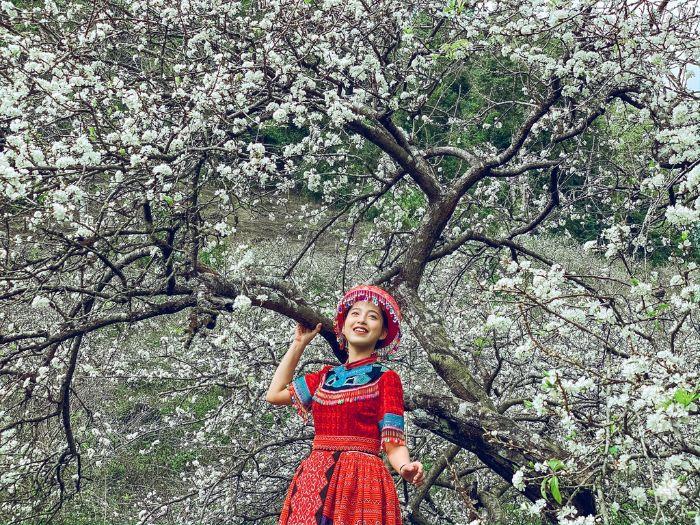 Thưởng thức khung cảnh Mộc Châu tuyệt đẹp giữa mùa hoa mận chín