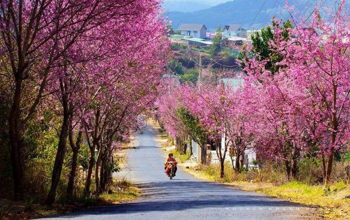 Bức tranh mùa xuân với hoa đào tuyệt đẹp ở Sapa