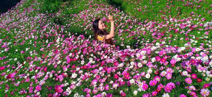 Chiêm ngưỡng Vườn hoa cánh bướm Sapa đẹp mê hồn