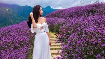 Đừng quên checkin đồi hoa oải hương khi đi du lịch Sapa tháng 5