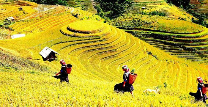 Mùa thu là thời điểm bạn được chiêm ngưỡng những cánh đồng lúa chín vàng