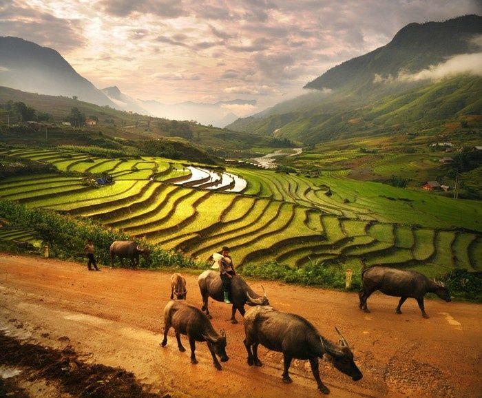 Những cánh đồng xanh mướt từ khung cảnh trên cao