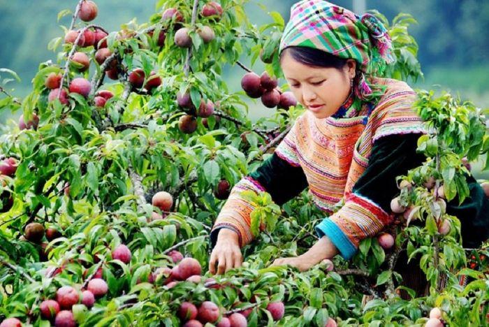 Tận hưởng các loại hoa thơm trái ngọt