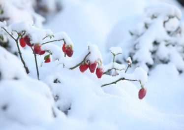 Tham gia lễ hội Mùa đông ở Sapa vào tháng 12