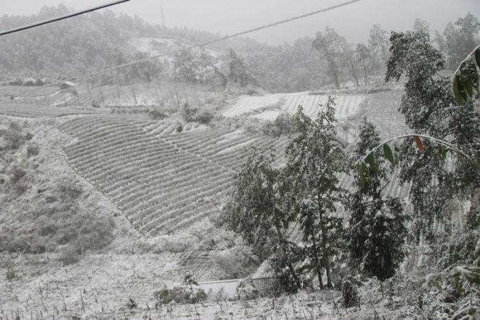 Hình ảnh du lịch Sapa tuyết phủ trắng