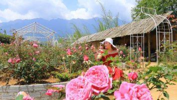 Thung lũng hoa hồng ngát hương ở Sapa