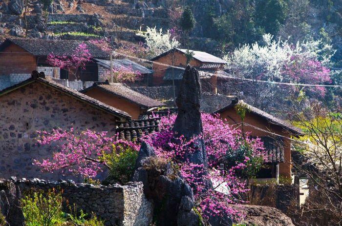 Sapa mùa Xuân rực rỡ sắc màu