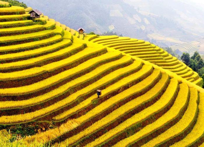 Ruộng lúa bậc thang đẹp như tranh vẽ ở Sapa