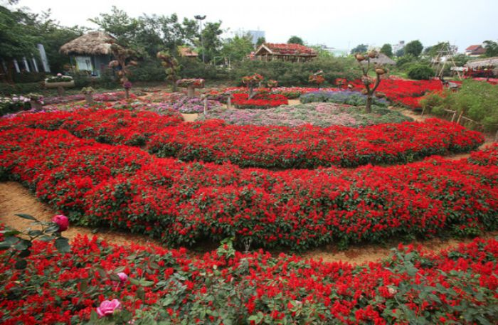 Chiêm ngưỡng thung lũng hoa hồng