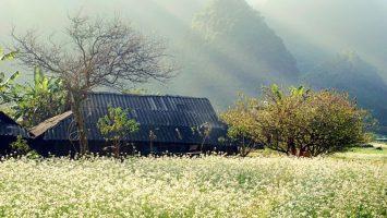 Mùa đông Hà Giang - mùa của sắc trắng tinh khôi