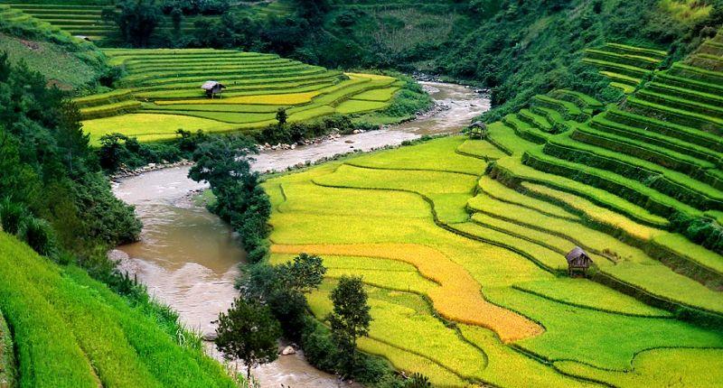 Ruộng bậc thang mùa lúa ngả vàng