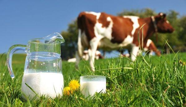 Sữa bò Mộc Châu