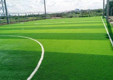 Cấu tạo mặt sân bóng đá cỏ tự nhiên bằng lá gừng